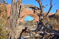 Dead Juniper Tree