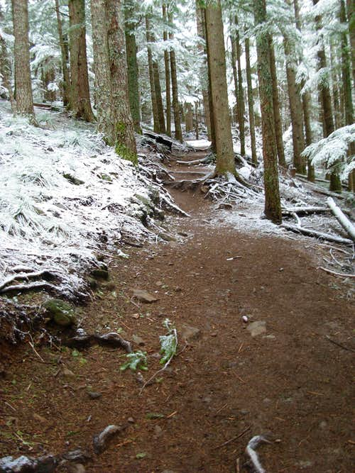 Snow On Mount Si Trail