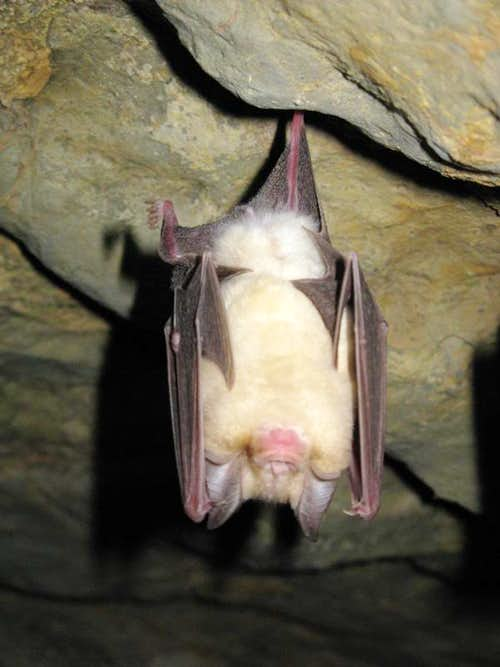 Bat in the Kardeh cave
