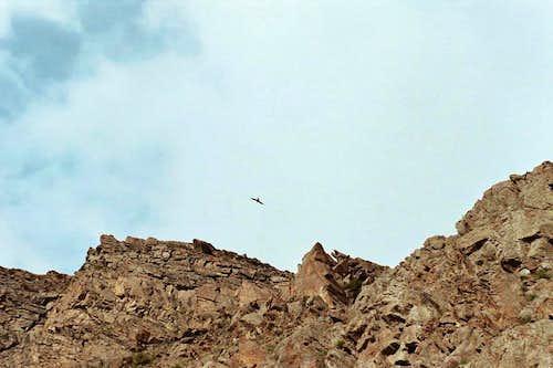 Eagle Flight at Dachigun Campsite