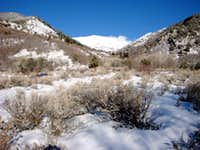 Sharp Mountain as seen looking NW up Serviceberry Canyon