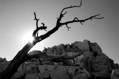 Valley of the Moon - Stump silhouette