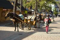 Horses in the main street of Zakopane