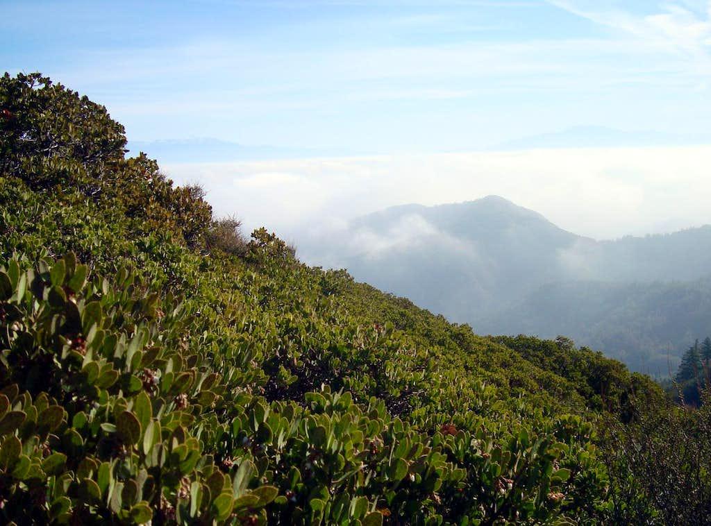 Green Slopes on Santiago Peak