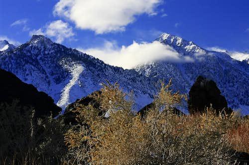 Sub Sierra Foliage