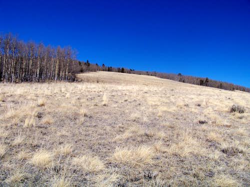 Grassy elk meadow, south slopes of Round Hill