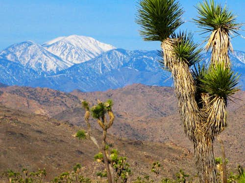 Mt. San Gorgonio from Joshua Tree