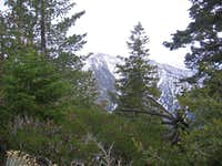 Mt. Baldy from Iron Mountain trail
