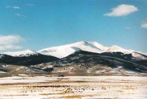 Silverheels covered in snow...