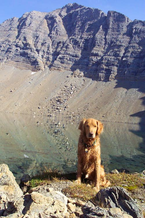 Hiking Buddy