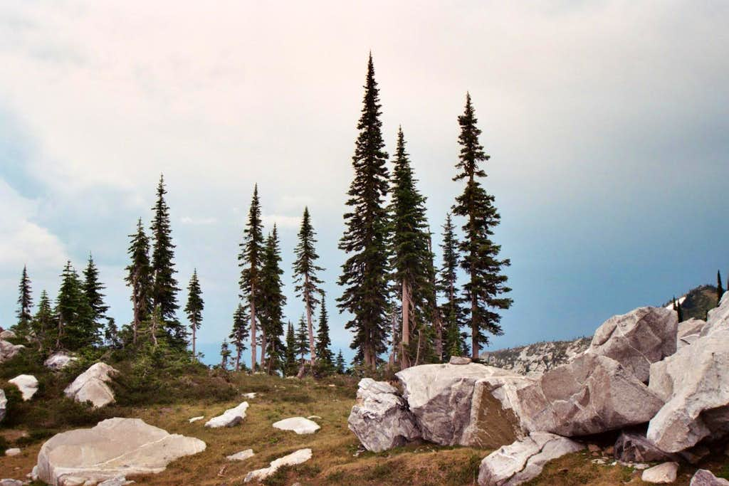 Subalpine Forest - Selway Crags