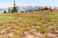 Subalpine Meadow - Selway Crags