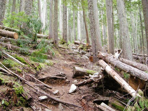 Trail in the Forest to Wedgemount Lake
