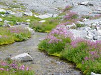Streams and Flowers around Wedgemount Lake