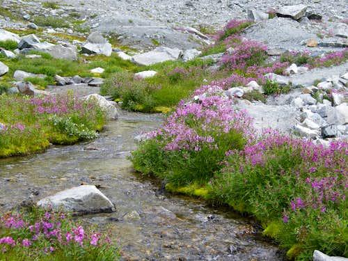 Streams and Flowers around Wedgemount Lake