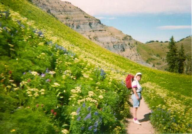 Wildflowers along the Aspen...