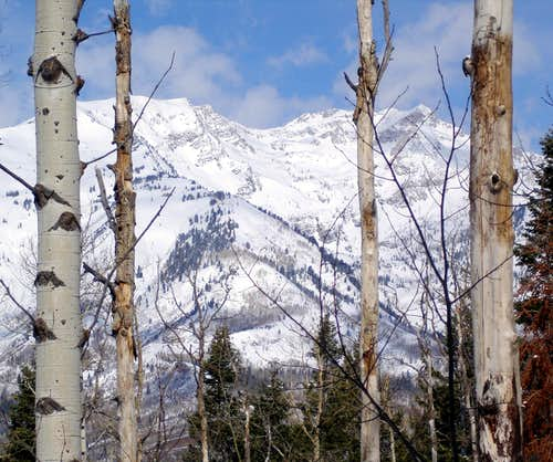 White Baldy from the Tibble Fork Trail