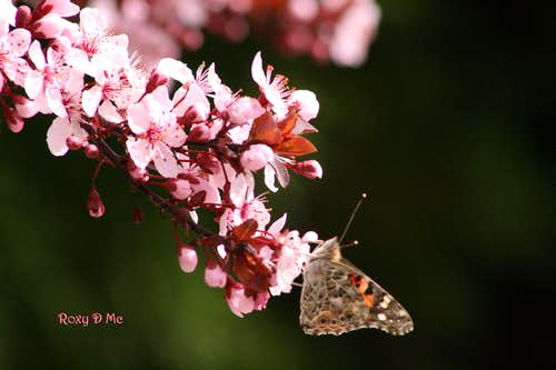 For all you butterfly lovers out there :0)