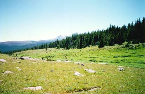 Meadows in the Upper Uinta...