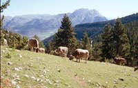 Pedraforca from mountain...