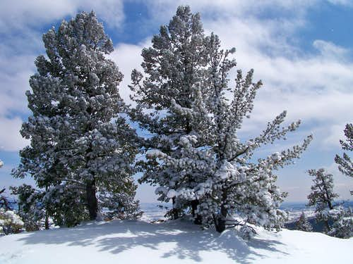 Trees on the summit of Chautauqua Mountain