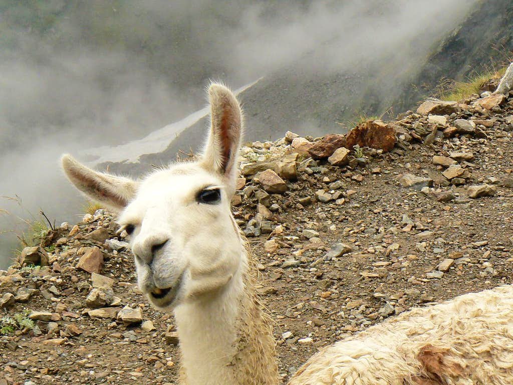 Let's say they are not typical animals of the french Pyrénées but we observed them here !!