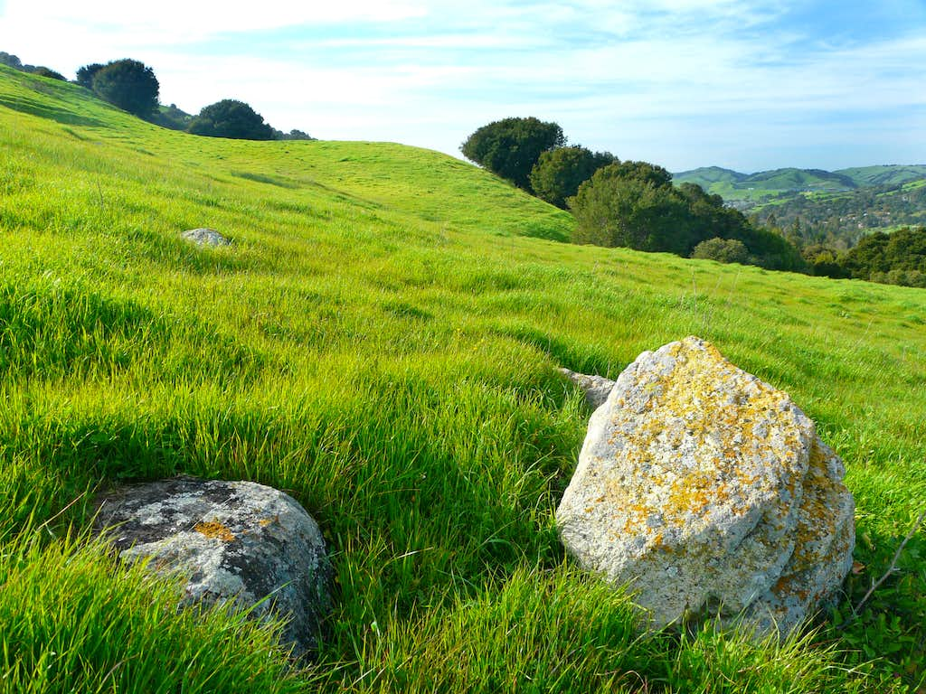 Fresh spring grass on Orinda ridge