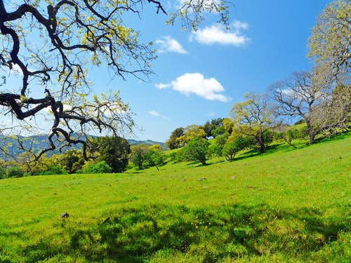 Spring on Burdell Mtn.