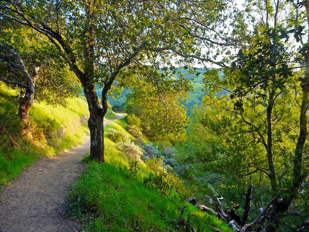 Trail on Big Rock Ridge