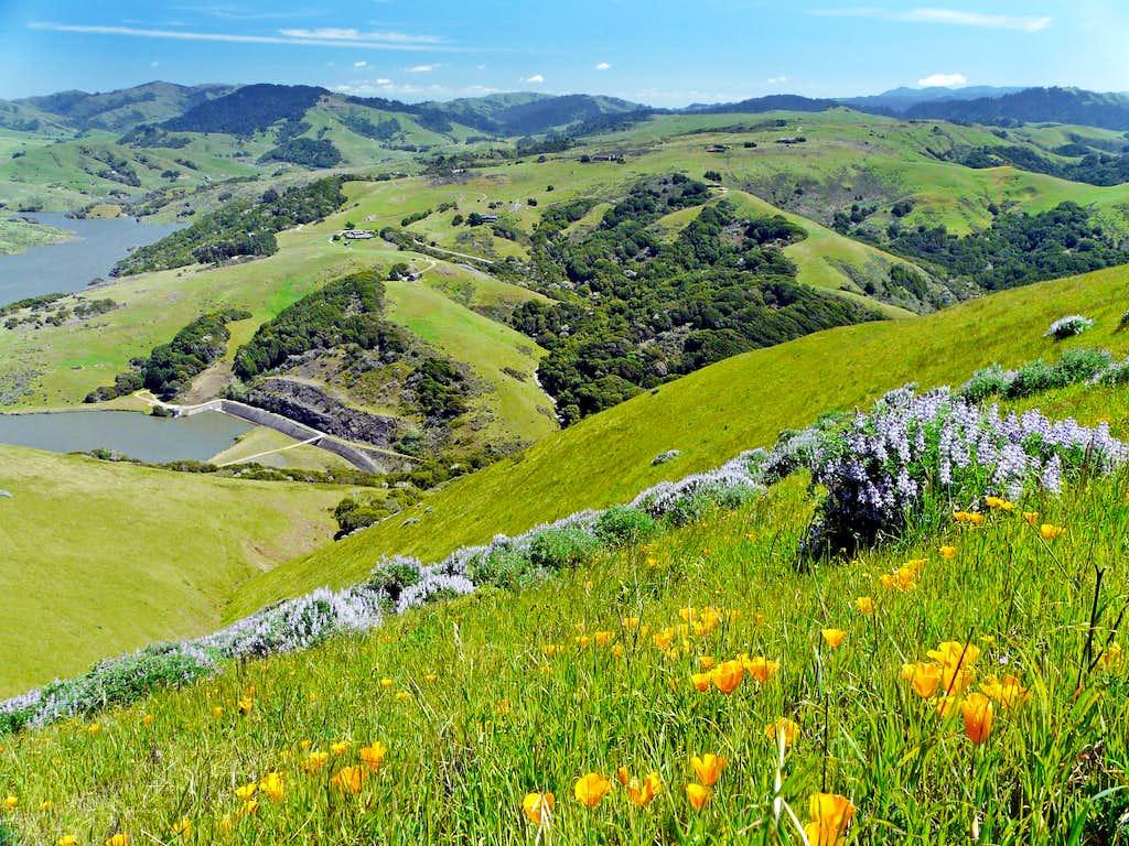 Flower covered hillside