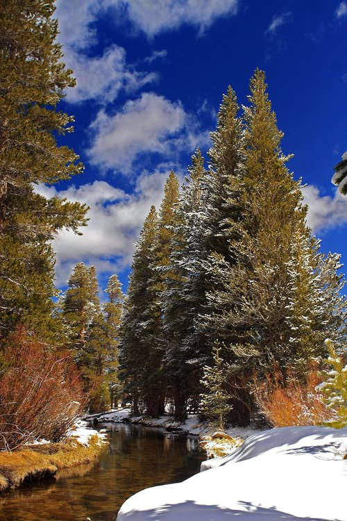 Rock Creek Pines