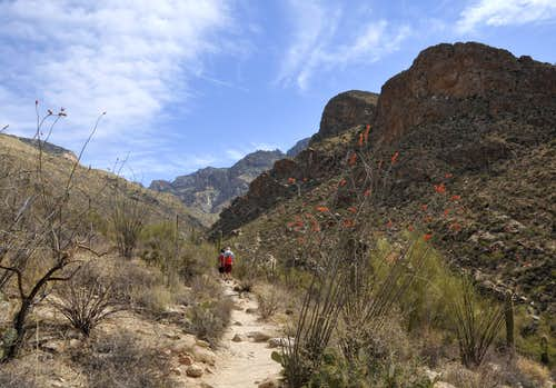 Pima Canyon