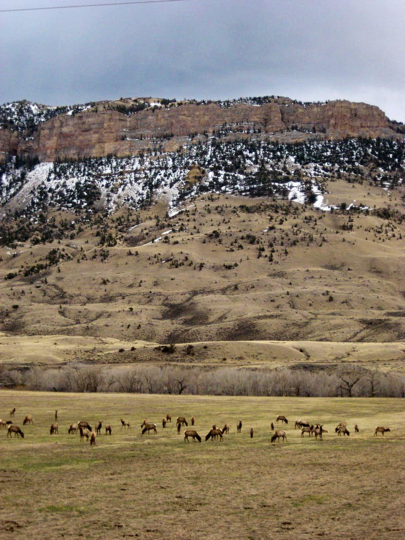 Elk below Sheep Mountain