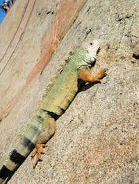 A bit of reptilian free solo...