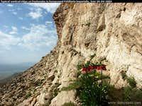 Fritillaria imperialis, Zagros mountains Iran