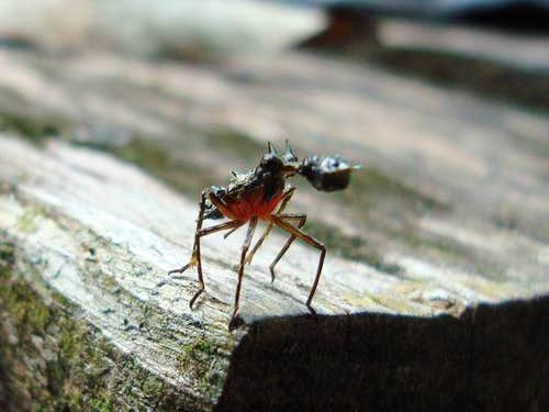 Belizian insect - weird animal