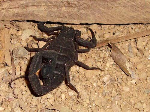 Victoria Peak - Scorpion
