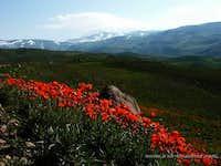 Near Mt Sabalan, Iran
