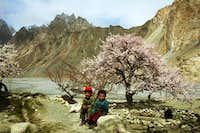 Blossom in upper Hunza