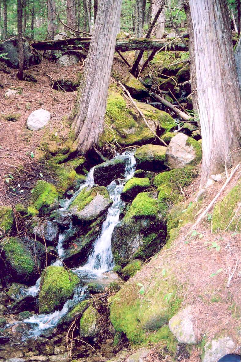 Small Trailside Brook