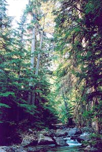 Western Hemlock and Western Whitepine