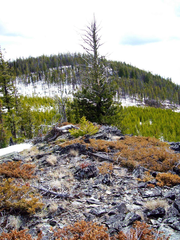 Kerr Mountain Summit