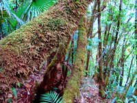 mossy trees in Mount Margaret