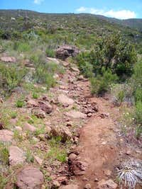 The Viejas Mtn trail