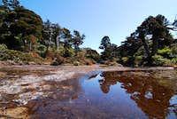 Yakushima marsh
