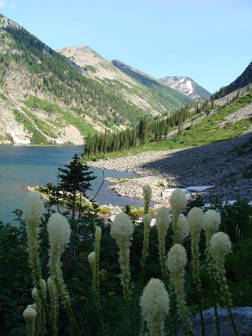 Beargrass at Rock Lake