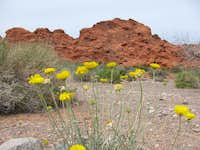 Springtime in Valley of Fire
