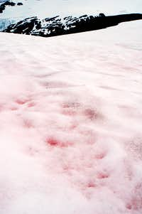 Pink Snow where Ice Worms grow