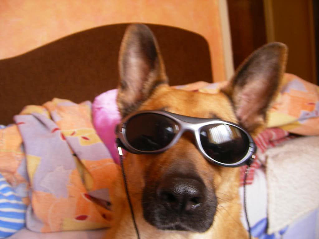 my cool dog