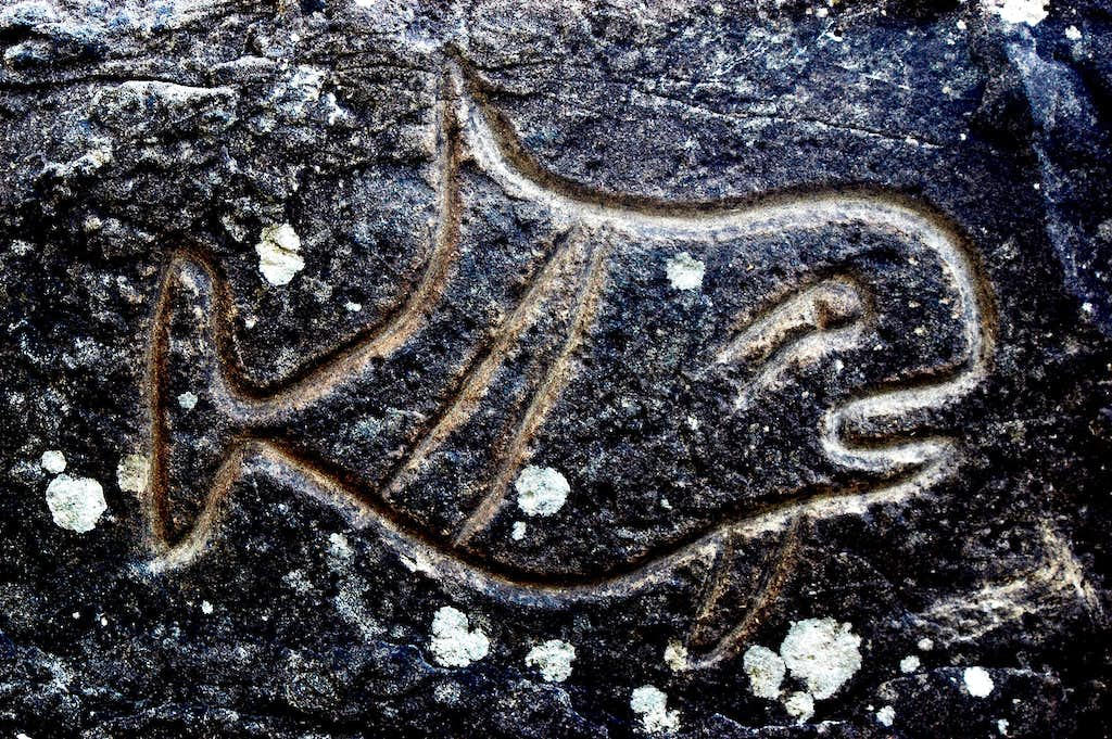 Petroglyph Olympic National Park
